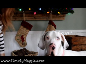Great Dane Remi in Simply Maggie's Arm Knitting Video.