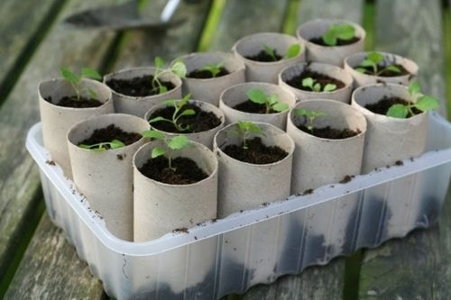 10 Seed Starting Container Ideas with Simply Maggie
