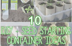 10 DIY Seed Starting Containers with Simply Maggie