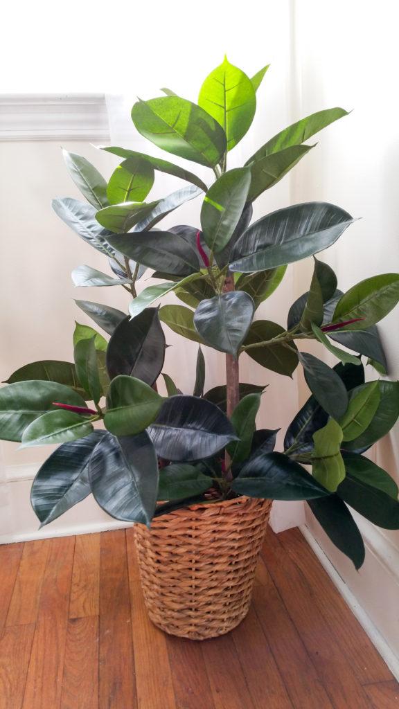 plant-review-3